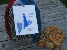 A bountiful harvest from Pemaquid Mussel Farms