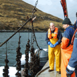 Commercial Aquaculture Systems