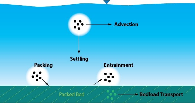 The different processes modeled by the Sediment Transport Model.